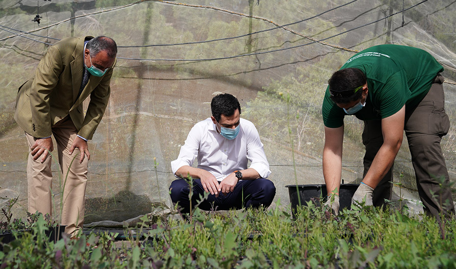 El presidente Juanma Moreno observa cómo es el trabajo que se realiza en el vivero de San Jerónimo.