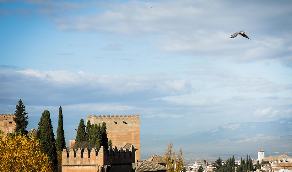 Los otros 'guardianes' del entorno de la Alhambra