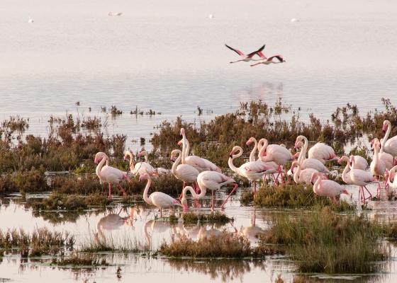 Andalucía asiste como destino protagonista de turismo ornitológico a la 'British Birdwatching Fair 2018' de Rutland