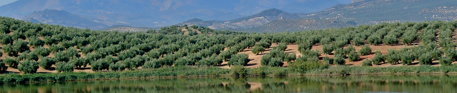Vistas de Jaén