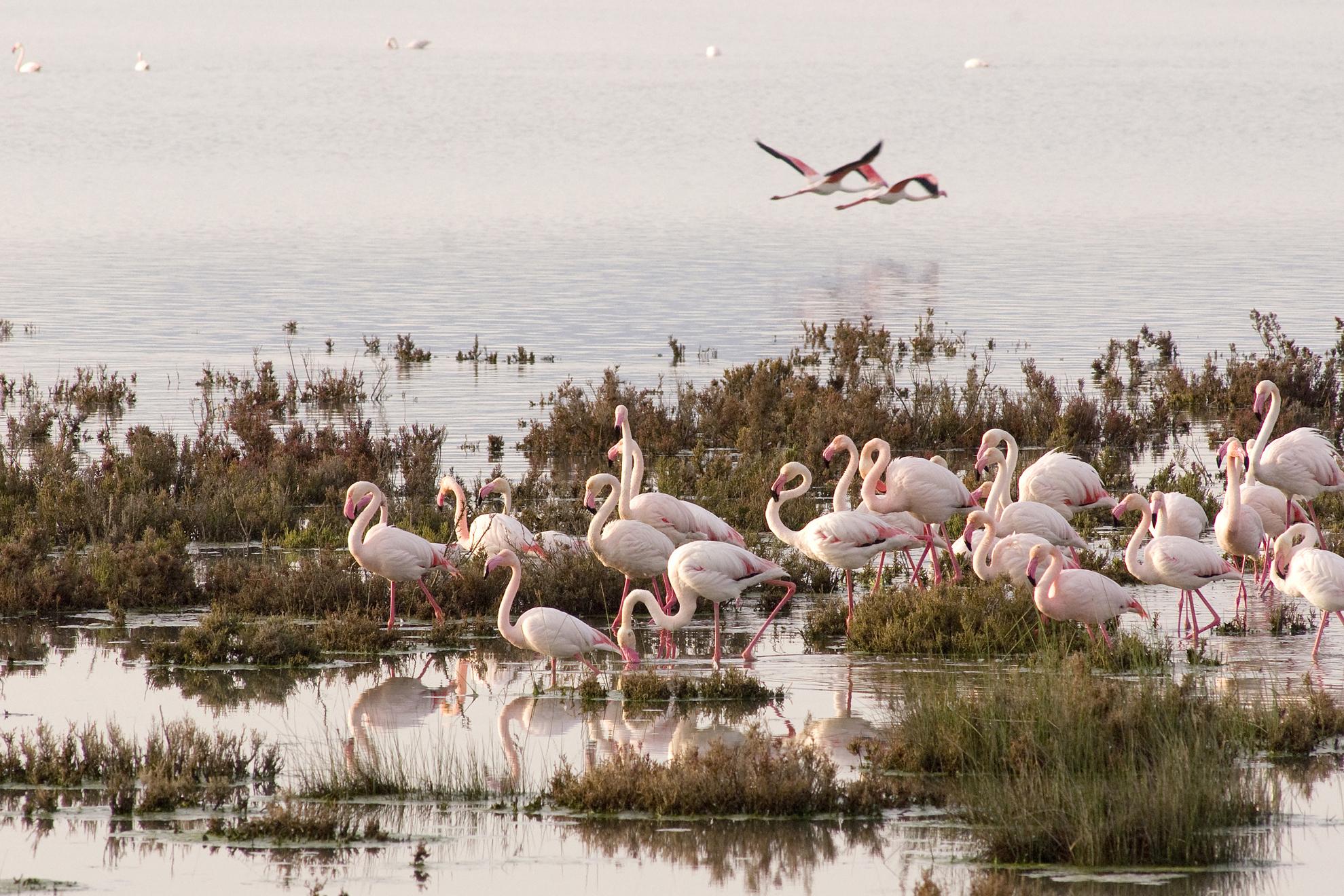Andalucía difunde su oferta de turismo de naturaleza en el mercado nacional