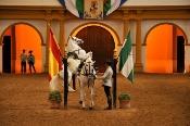 La Real Escuela Andaluza del Arte Ecuestre programa 106 exhibiciones para 2019