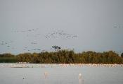 La Junta participa en DoñanaBirdFair para promocionar la región como destino de naturaleza y turismo ornitológico