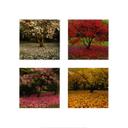 Muestra Imagen Changing seasons