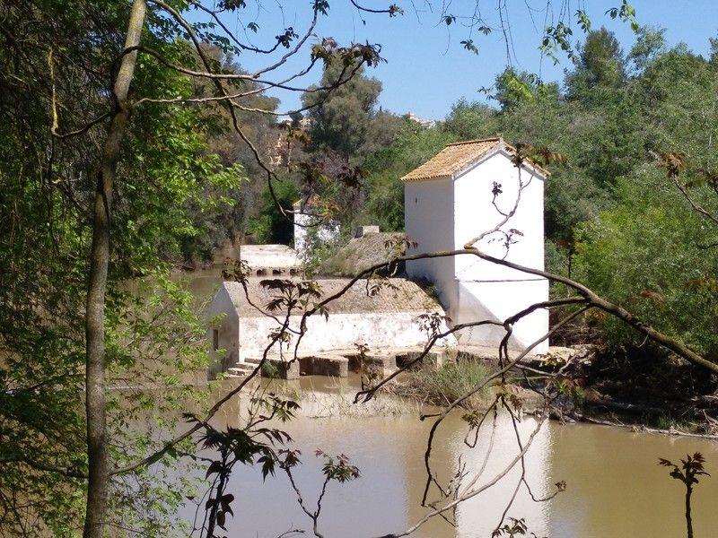 Molino de Benarosa, Alcalá de Guadaira