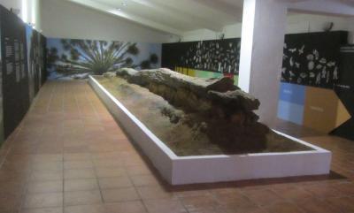 Tronco de árbol fosilizado en El Berrocal