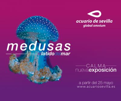 Medusas, el latido del mar
