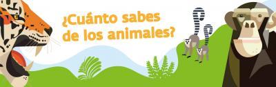 Actividades sobre animales online, Bioparc Fuengirola