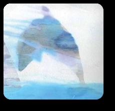 Delfín (delfin.jpg)