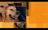 Banner_Las mascotas
