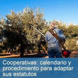 Cooperativa calendario