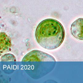 PAIDI 2020