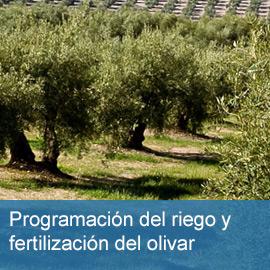 Programación del Riego y la Fertilización del Olivar