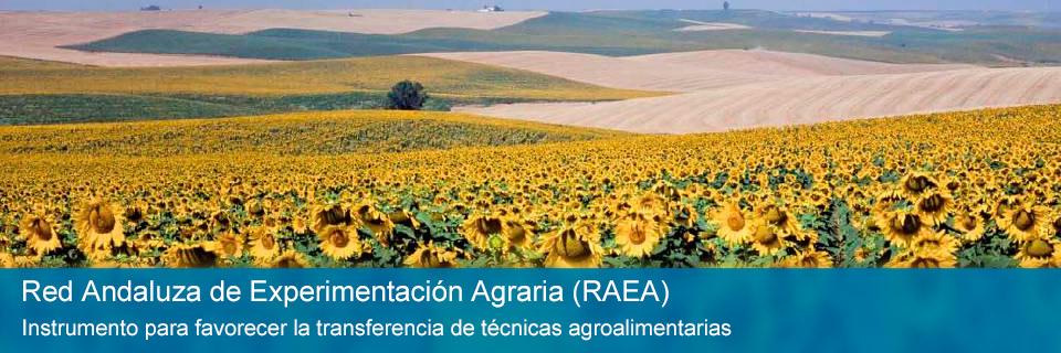 Red Andaluza de Experimentación Agraria (RAEA)