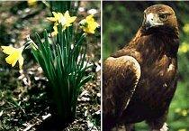Flor y águila imperial