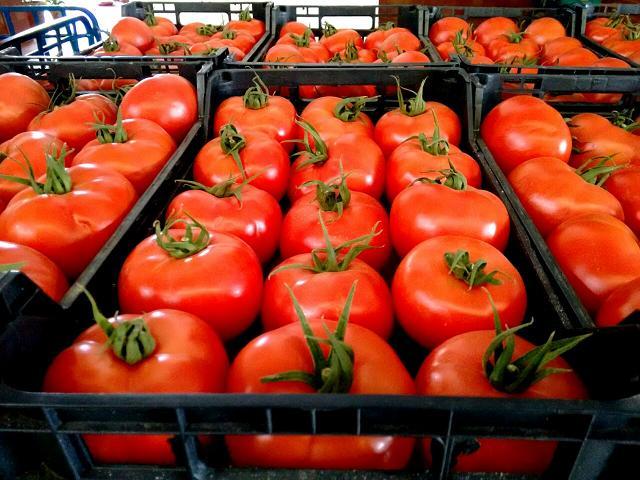 Tomates IMG-20150305-WA0019