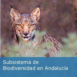 Subsistema de Biodiversidad en Andalucía