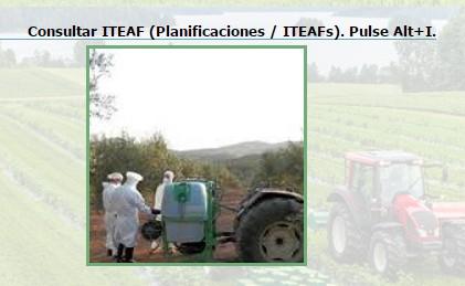 Consultar ITEAF