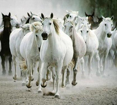 Imagen caballos