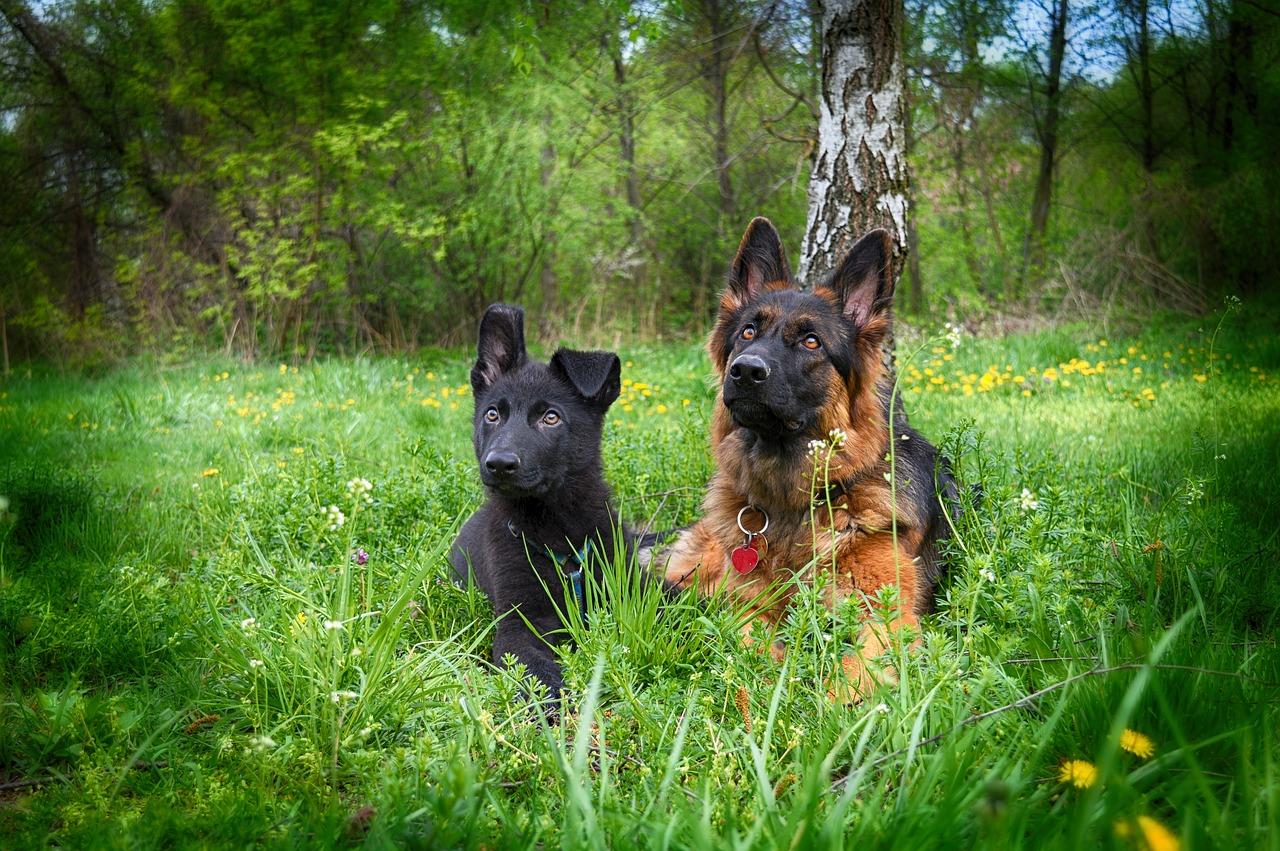 En Andalucía hay registradas 2,8 millones de mascotas
