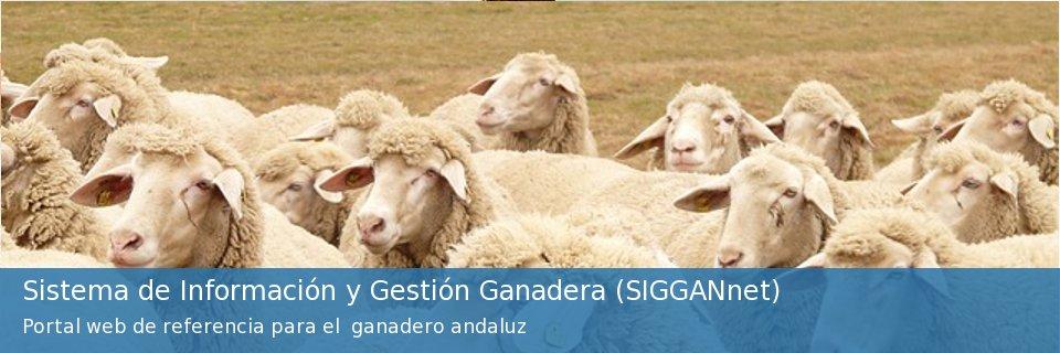 Sistema de Información y Gestión Ganadera (Sigannet)