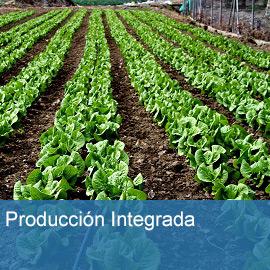 Producción integrada