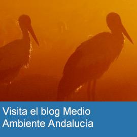 Blog Medio Ambiente Andalucía