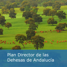 Plan Director de la Dehesa