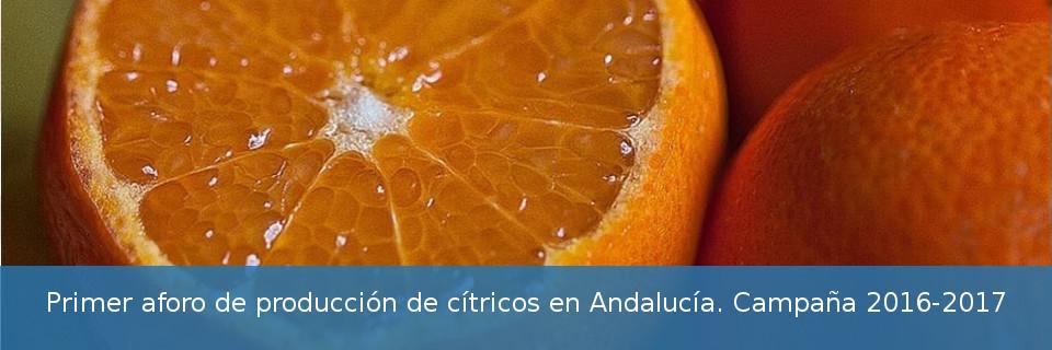 Primer aforo de producción de cítricos en Andalucía. Campaña 2016-2017