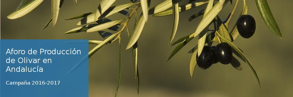 Aforo de producción de olivar en Andalucía. Campaña 2016-2017.