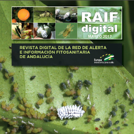 Revista #RAIFdigital