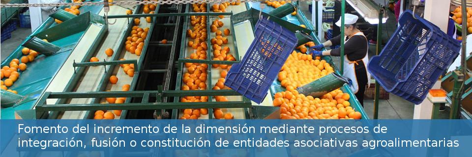 Fomento del incremento de la dimensión mediante procesos de integración, fusión o constitución de entidades asociativas