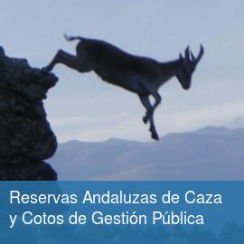 Reservas Andaluzas de Caza (RAC) y Cotos de Gestión Pública