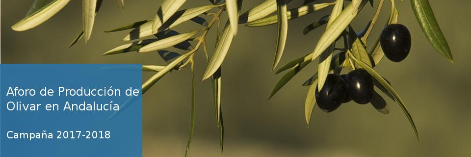 Aforo de producción de olivar en Andalucía. Campaña 2017-2018.