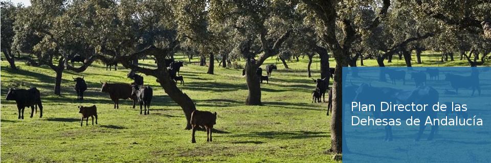 Plan Director de las Dehesas de Andalucía