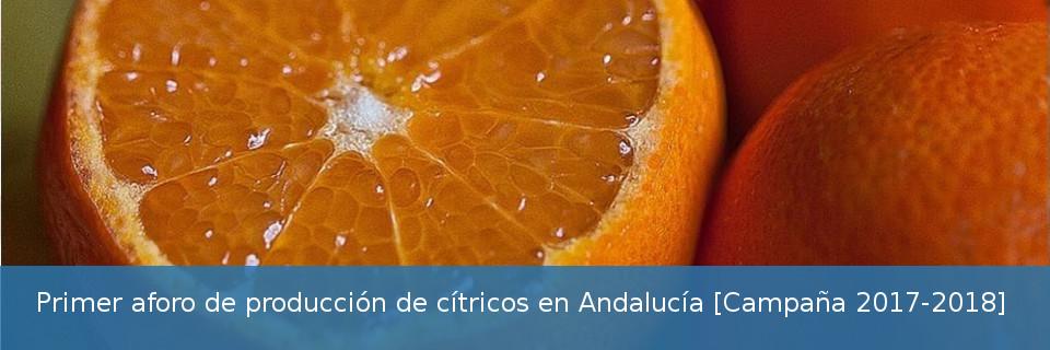 Primer aforo de producción de cítricos en Andalucía. Campaña 2017-2018