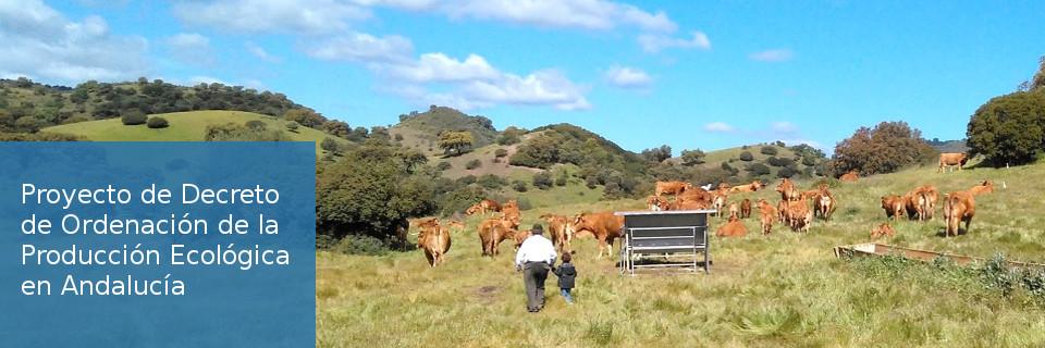 Proyecto de Decreto de Ordenación de la Producción Ecológica en Andalucía
