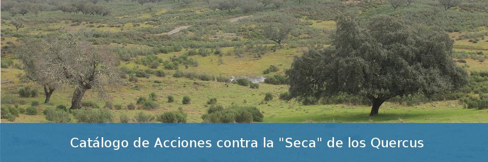 """Catálogo de Acciones contra la """"Seca"""" de los Quercus"""