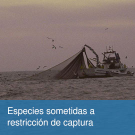 Especies sometidas a restricción de captura