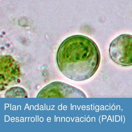 Plan Andaluz de Investigación, Desarrollo e Innovación (PAIDI)