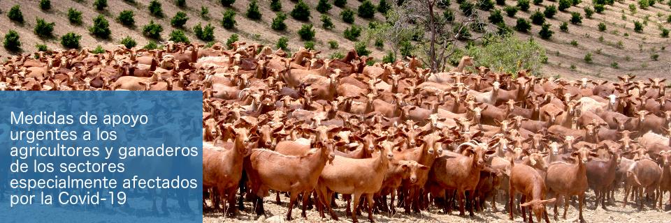 Ayudas para agricultores y ganaderos especialmente afectados por la situación generada por la COVID-19