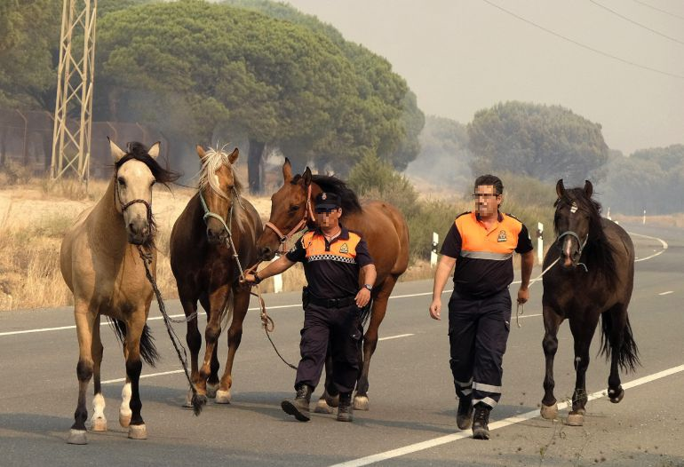 Voluntarios ayudando a caballos