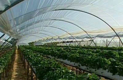 Potencia agroindustrial