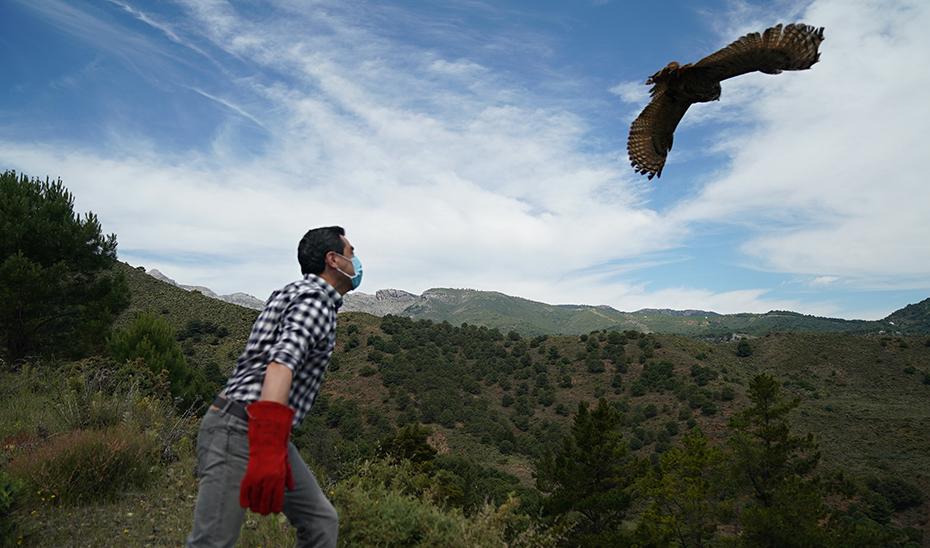 Juanma Moreno lanza una de las aves de la suelta que ha tenido lugar en la Sierra de las Nieves.