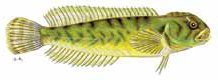 Peces e invertebrados de medios acuáticos epicontinentales