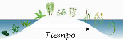 Esquema evolutivo de los vegetales desde las algas primitivas hasta las plantas marinas