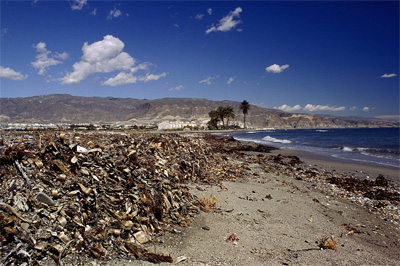 Arribazones de Posidonia acumulados en la playa de Roquetas de Mar