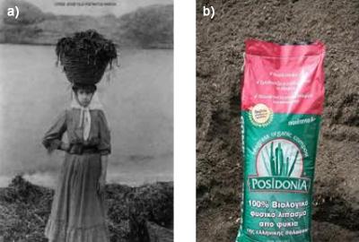Joven cargando un cesto de hojarasca de Posidonia en Córcega y saco de compost de Posidonia
