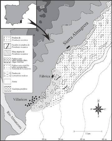 Impacto sobre la pradera de Posidonia producido por el vertido de Deretil hasta 1999