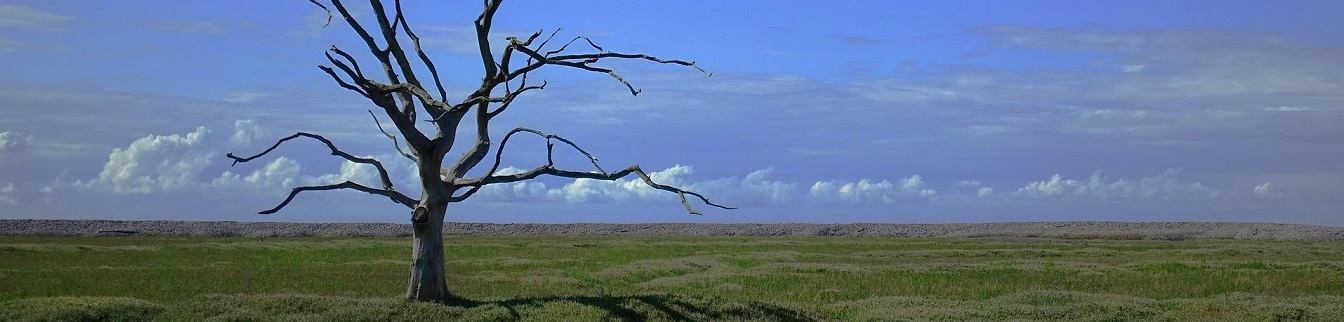 Árbol seco por cambio climático